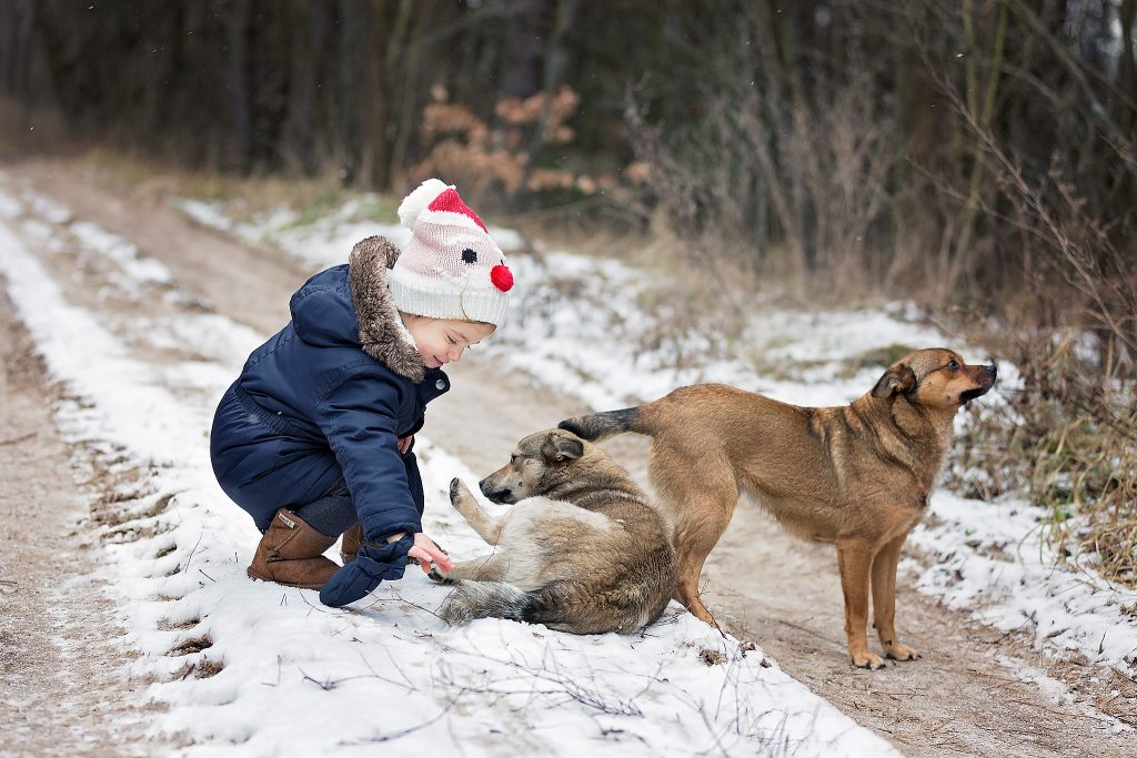 toddler and dogs photo